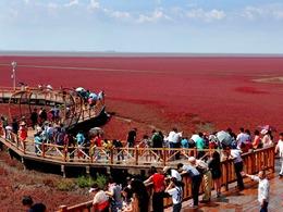 大自然孕育奇观:震撼红海滩