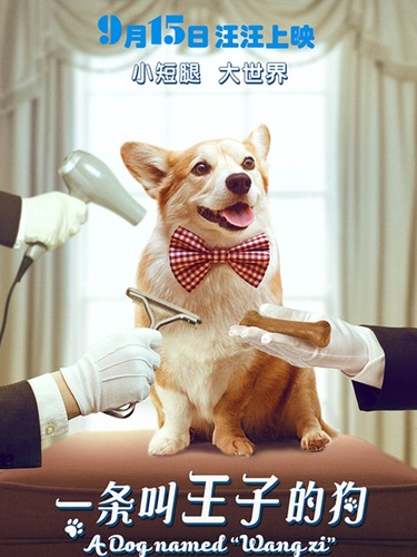 《一条叫王子的狗》<br>海报柯基搭配学妹