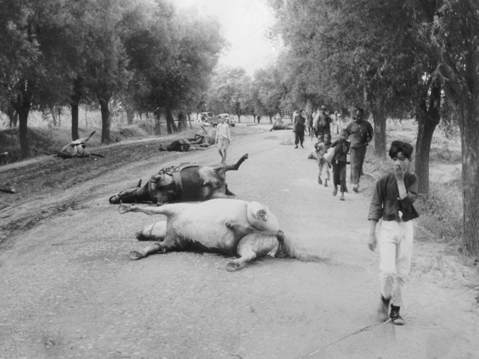 南苑军营附近,被日军飞机炸死的战马。(图源:VCG)